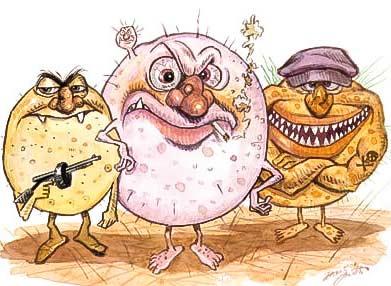 bacterii foliculita gangsteri cartoon desen